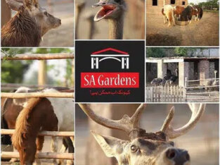Plot For Sale In Sa Gardens Prime Location Bader Block